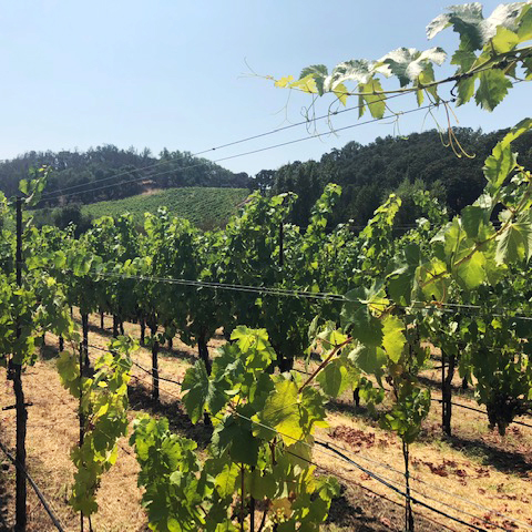 Jemrose Vineyard